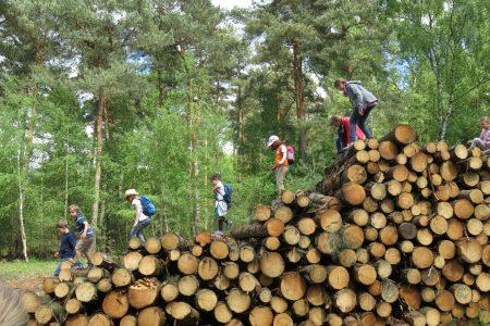 Jeder Baumstamm ein Klettergerüst